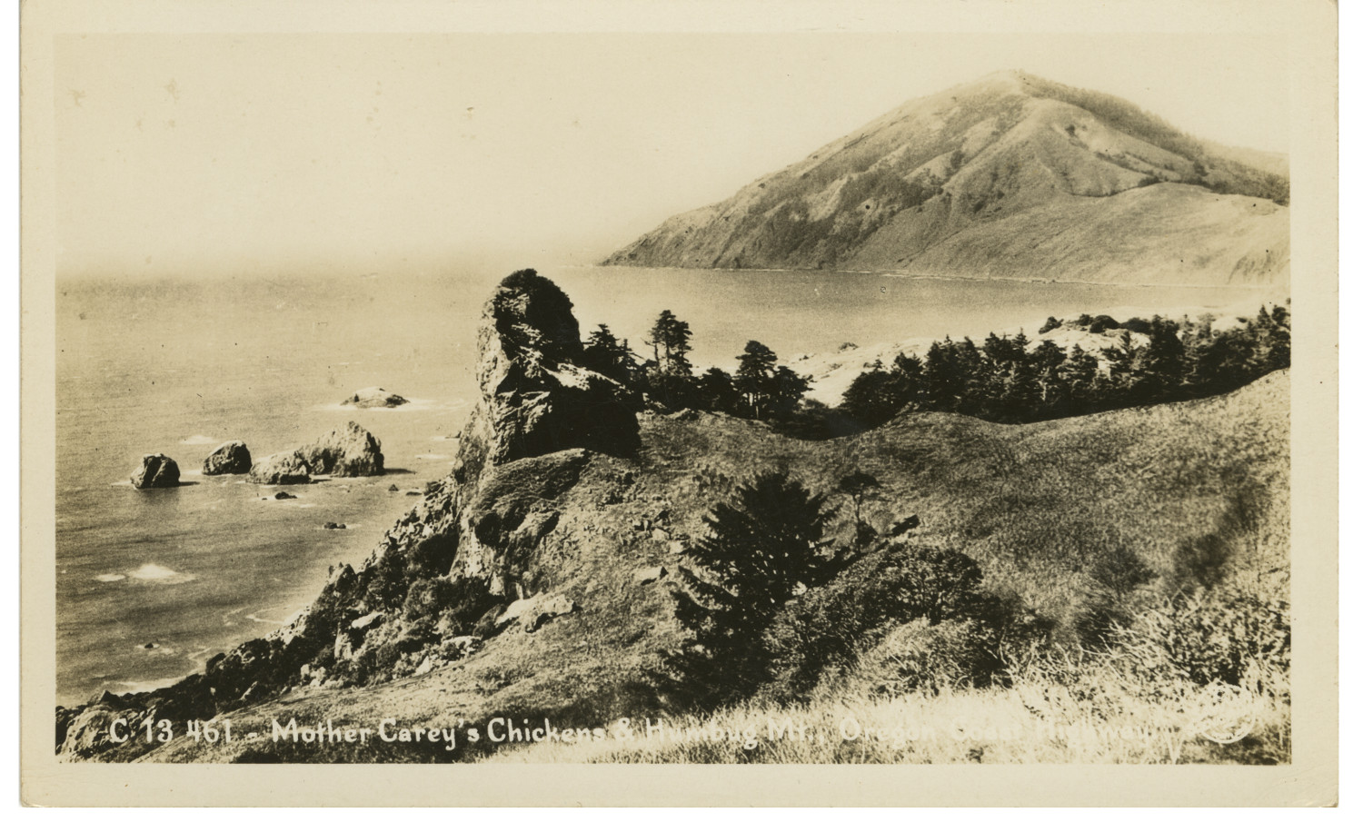 Mother Carey's Chickens and Humbug Mountain. Sawyers Collection.