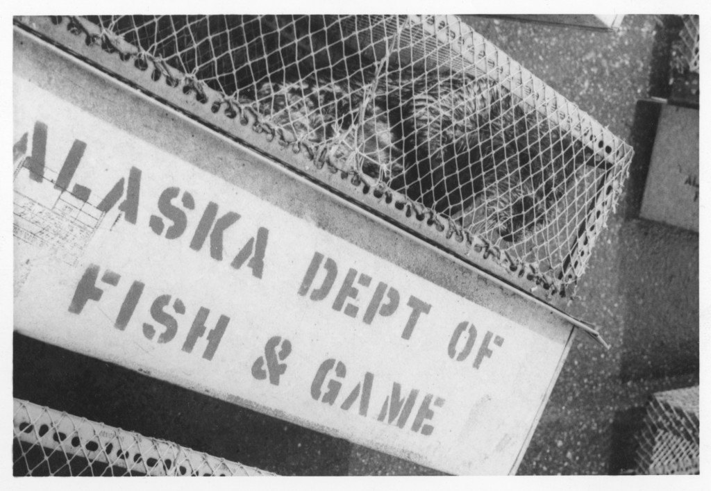 Sea Otters from Alaska — Translocation Project. July 18, 1970