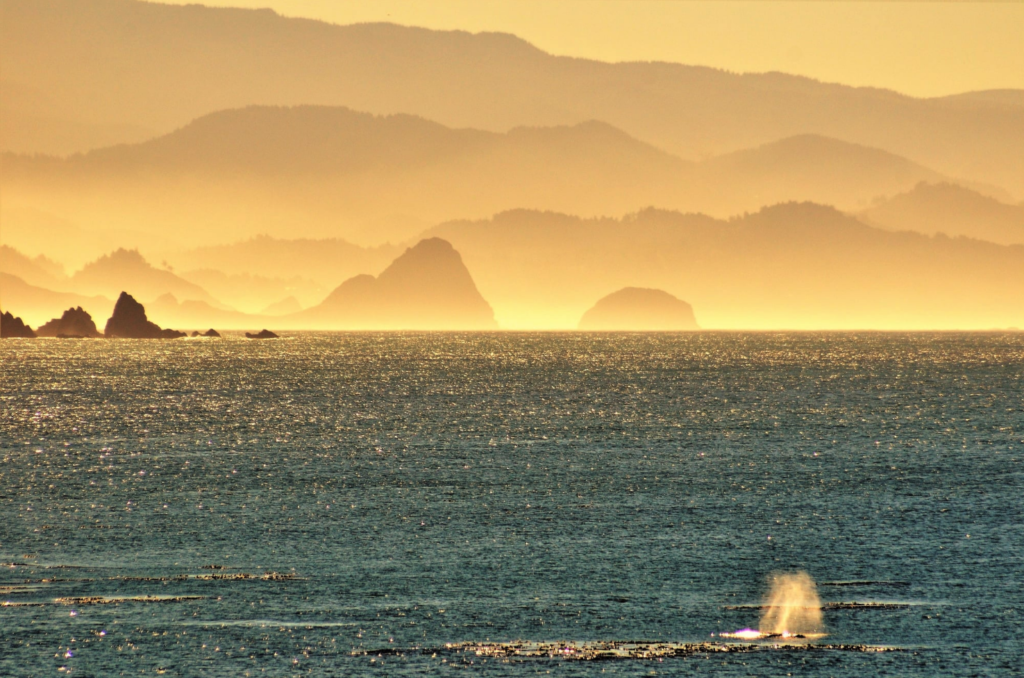 Whalewatching - October 14 2020